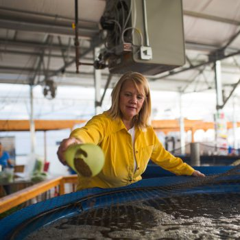 Rebecca Nelson with farm raised tilapia in a fish tank in Monticello, WI
