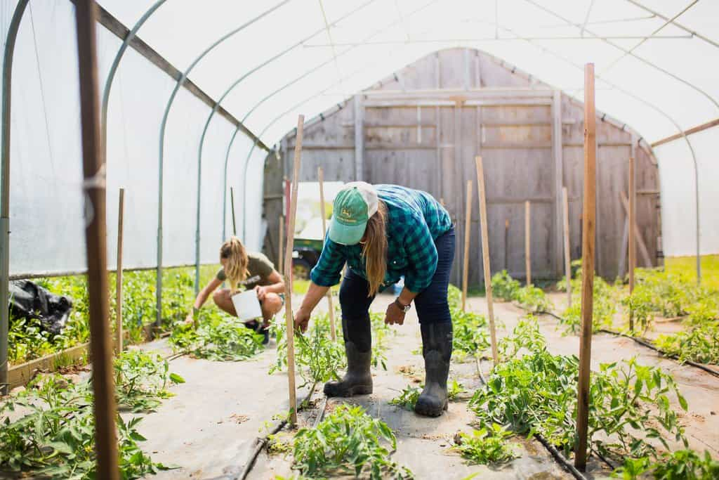 Farmers on Block Island work the land and tend to crops in a greenhouse