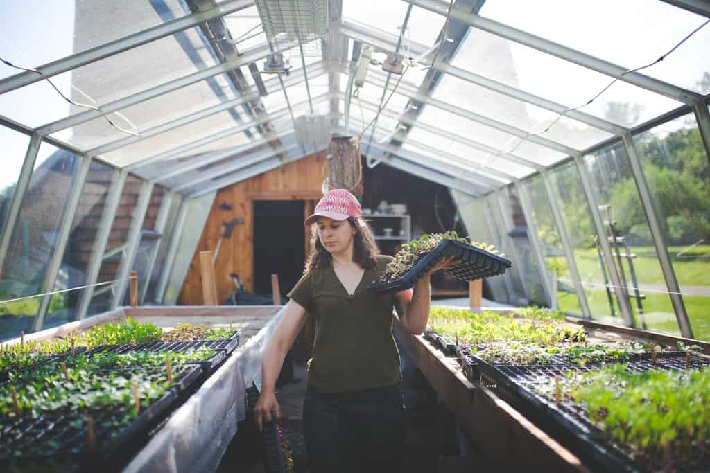 Woman carrying flat of seedlings in a greenhouse