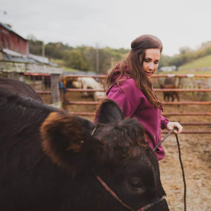Farmer Tammy Wiedenbeck leads a black cow with a halter