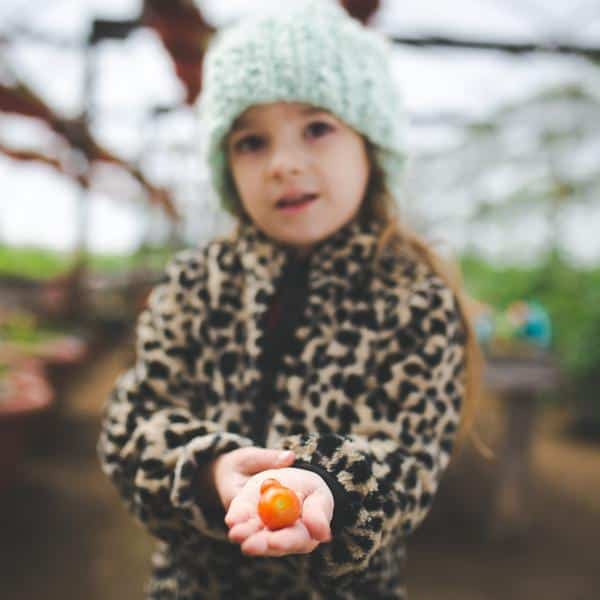 Young girl holds a tomato in a greenhouse