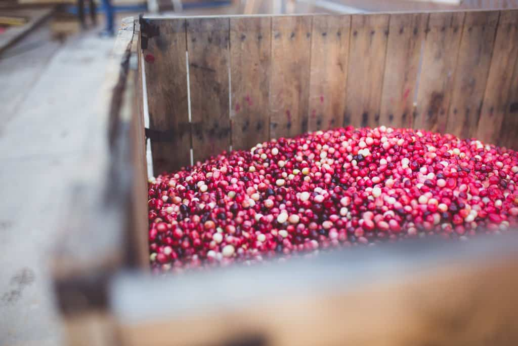 Cranberries in a wooden box in the back of a truck.
