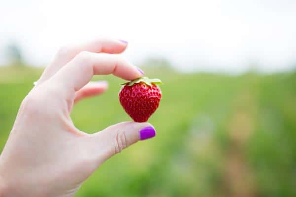 A woman's hand holding a fresh picked strawberry.