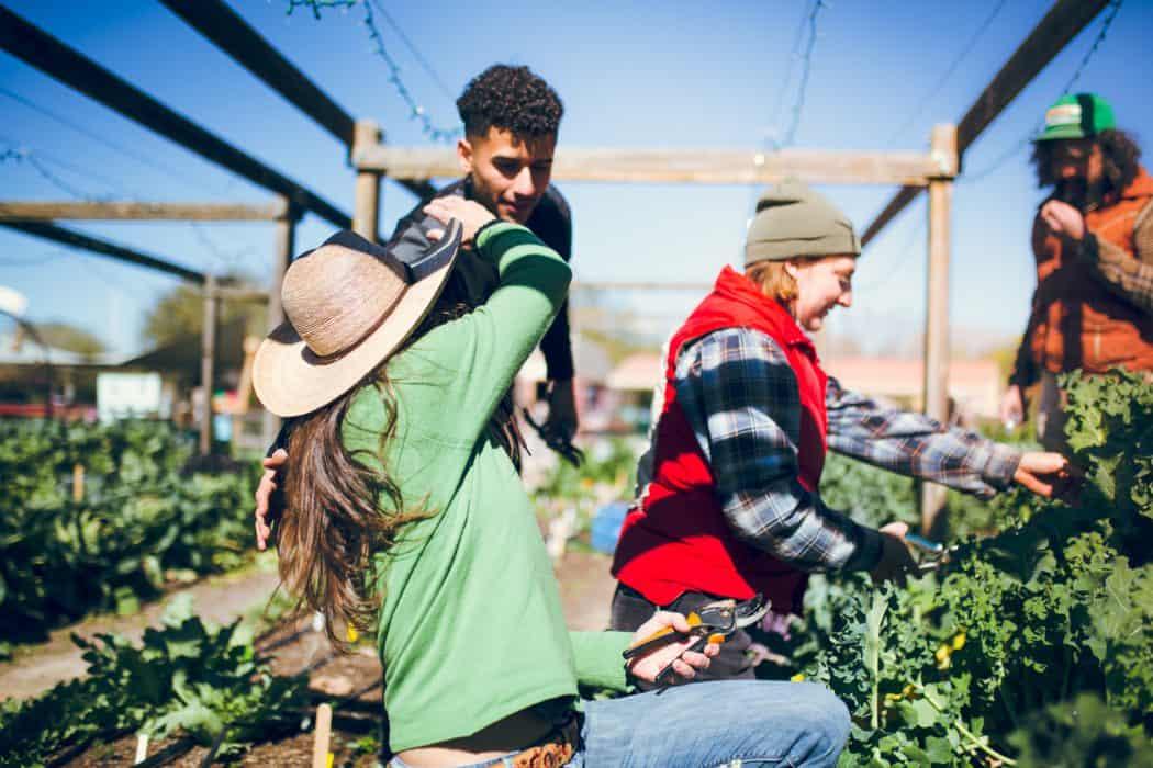 Volunteers help students learn at Tucson Village Farm.