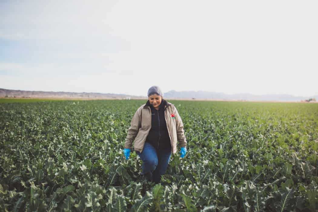 Lupe Camarena inspects the fields to make sure they are up to standard at Nature Fresh Farms in Yuma, AZ.