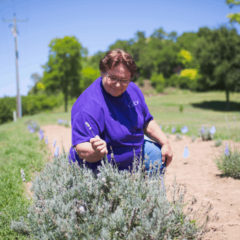 Mary Hamer tends to her lavender plants at Loess Hills Lavender Farm in Iowa.