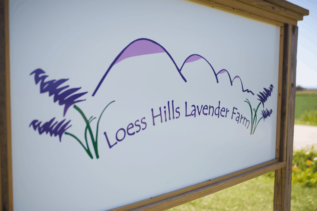 Loess Hills Lavender Farm is located in Missouri Valley, Iowa.