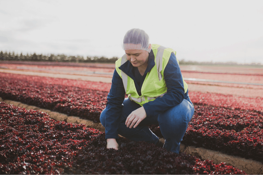 Stephanie Pharris inspects a field of lettuce at Duncan Farms.