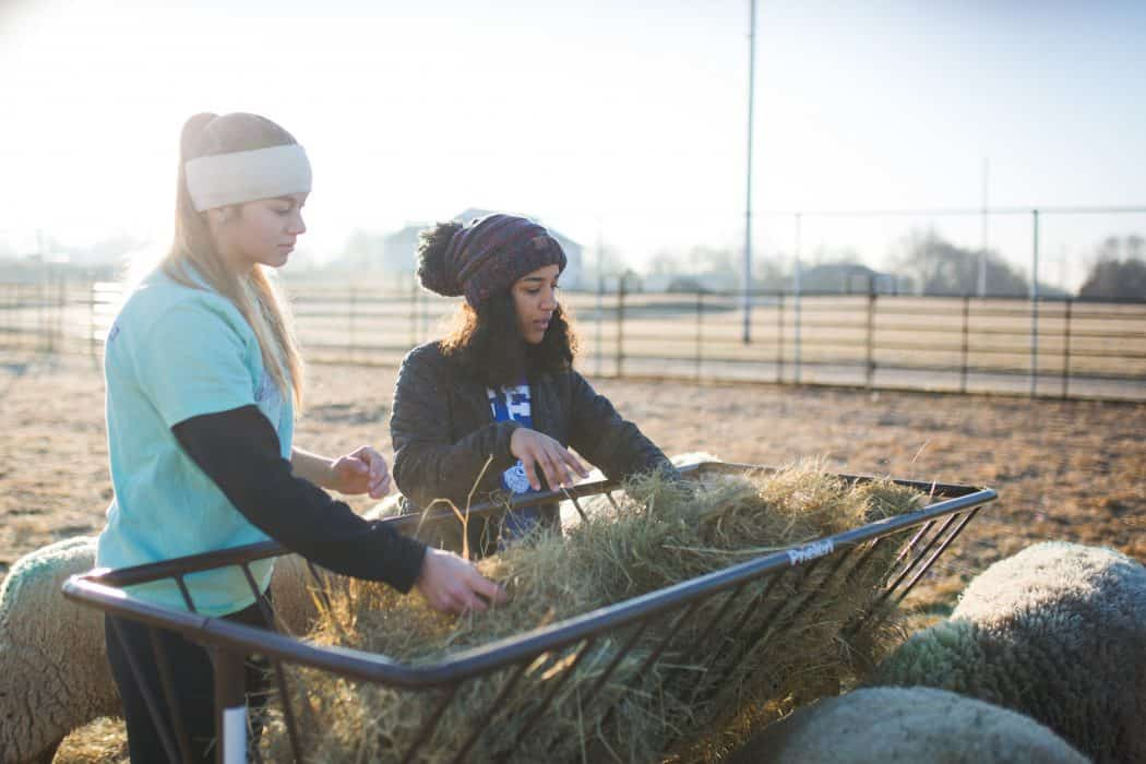 Two girls loading hay bales on farm in winter.