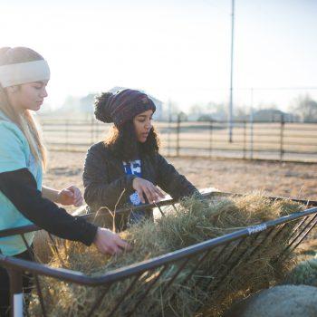 Two girls loading hay bales on farm in winter.
