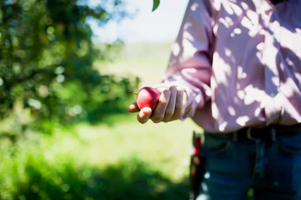 Woman holding a single apple in her hand at The Cider Farm orchard in Wisconsin.