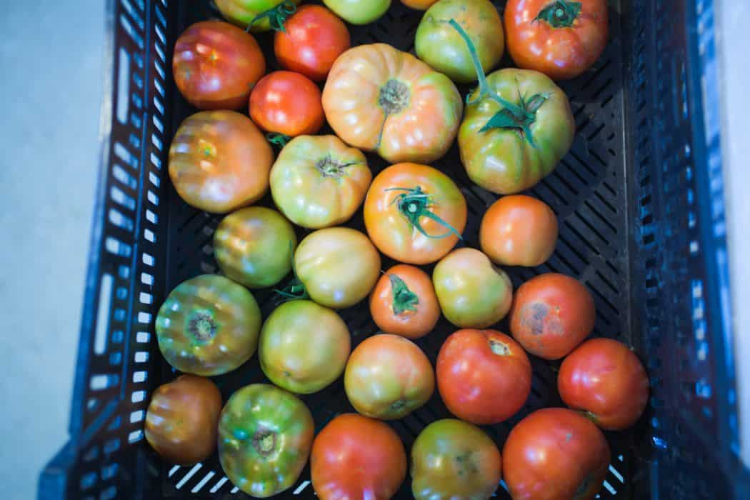 Fresh tomatoes in a black box ready for farmers market.