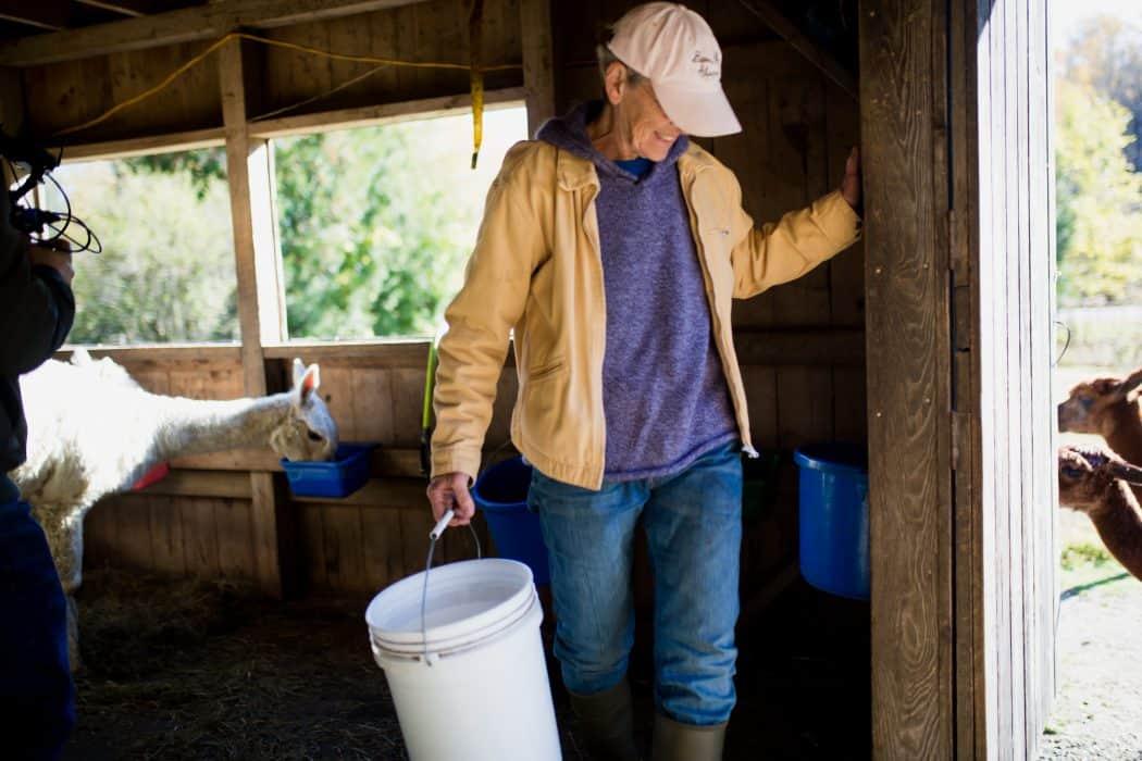 Lesley Bracker of Barron Hill Alpacas doing morning chores on the farm.