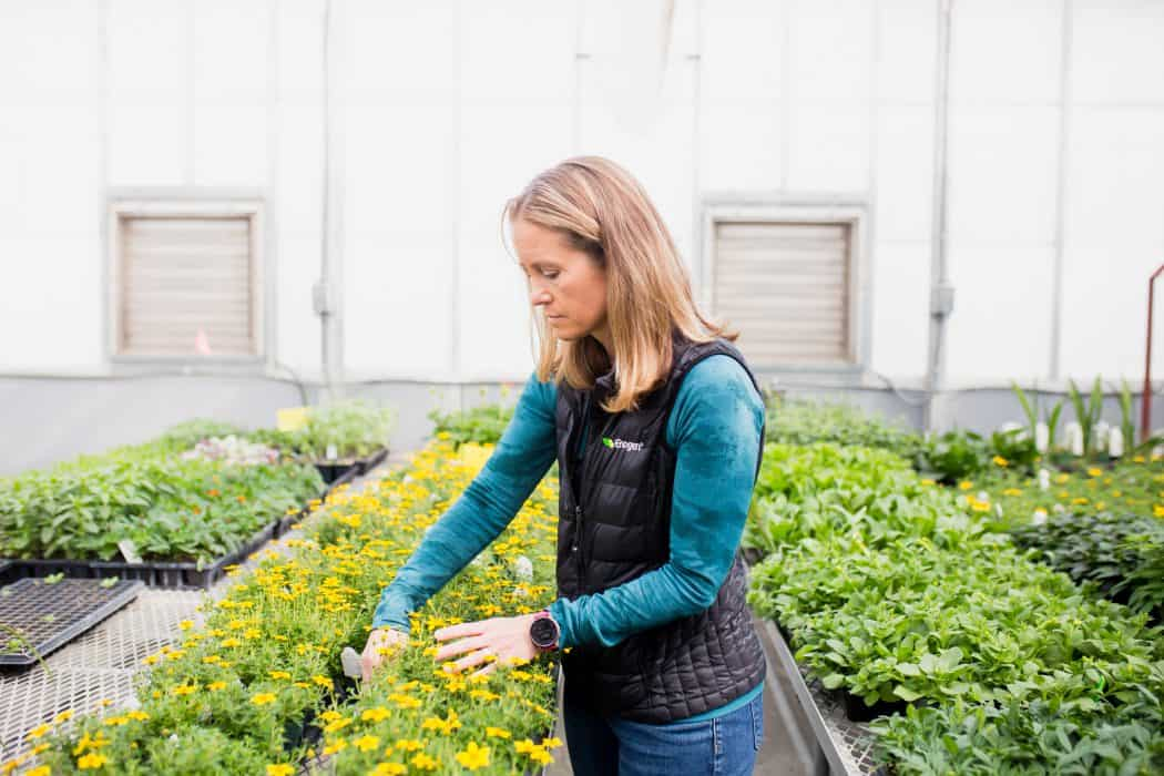 Liz Hunt, Head of Sustainable and Responsible Business for Syngenta in a greenhouse at Kansas State University looking at yellow flowers.
