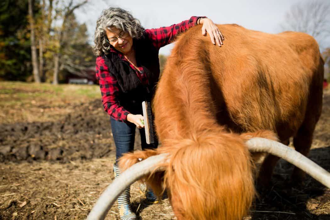 Woman in black vest and plaid shirt brushing a Scottish Highland Cattle.