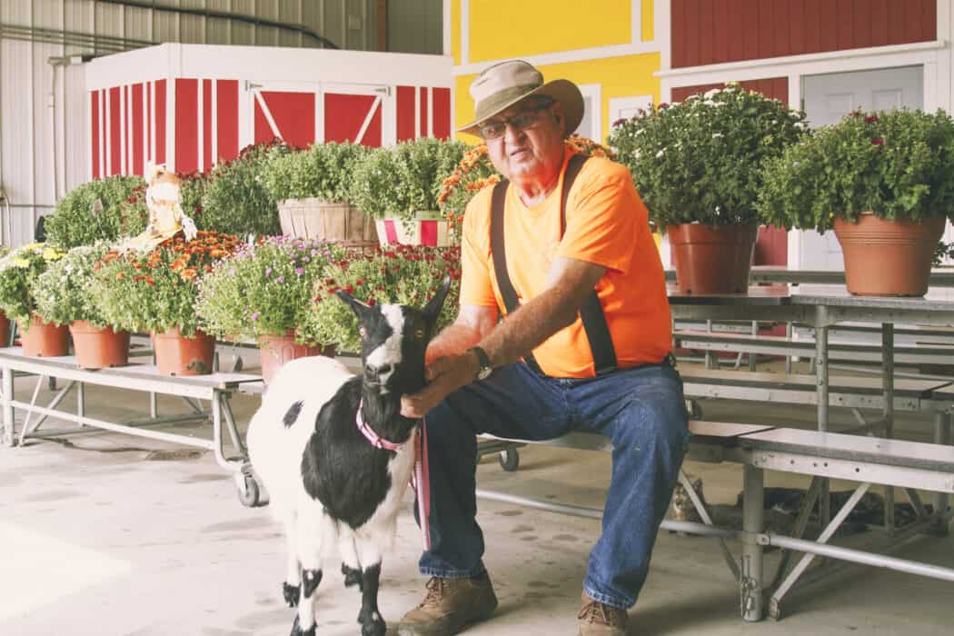 Man holding goat in front of mums for sale at Enchanted Acres.
